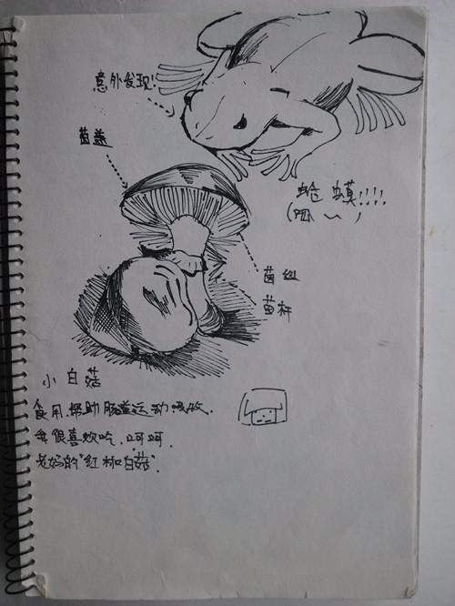 蘑菇台灯手绘设计图