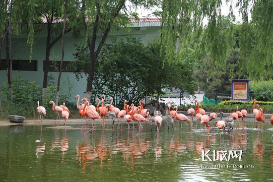 """""""六一""""来石家庄动物园与动物宝宝一起快乐过节"""