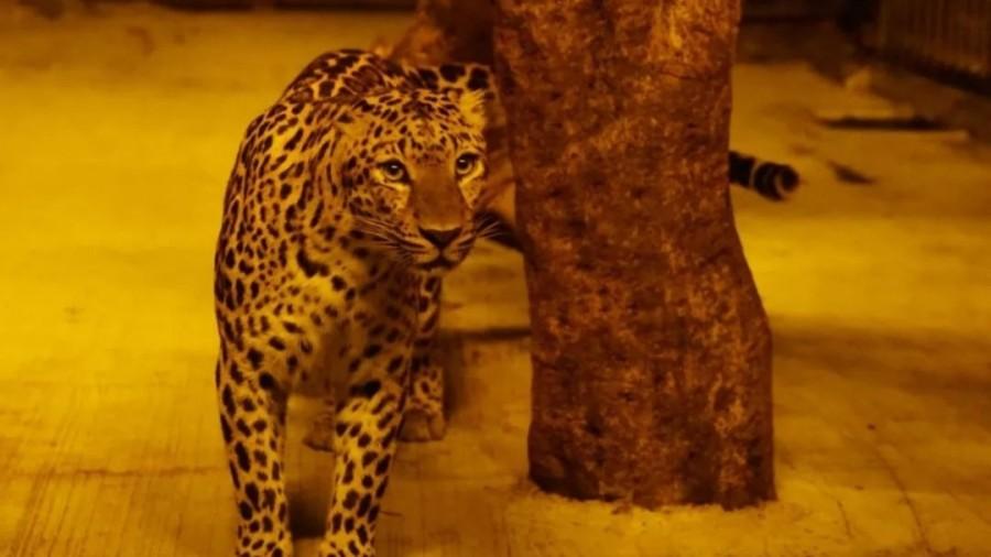 【深圳·動物園】限量搶購80元野生動物園萬圣節夜場門票,大小同價!