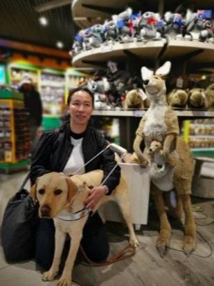 导盲犬该不该在公共交通出现?新加坡网友对此看法可不一!-热点新加坡