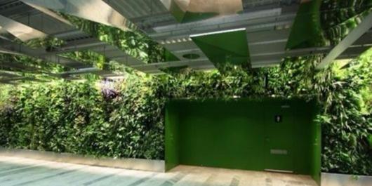 空間因植物墻不同,植物墻卻因它們而更精彩